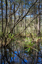 Everglades Landscape reflecting in a swamp Royalty Free Stock Photo