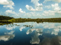 Everglades - Miami Royalty Free Stock Photo