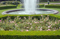 Evergreen boxwood hedge adorn a rose garden buxus sempervirens Royalty Free Stock Images