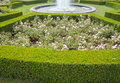 Evergreen boxwood hedge adorn a rose garden buxus sempervirens Royalty Free Stock Image