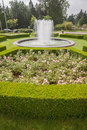 Evergreen boxwood hedge adorn a rose garden buxus sempervirens Stock Images