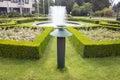 Evergreen boxwood hedge adorn a rose garden buxus sempervirens Royalty Free Stock Photos