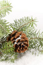 Evergreen Branch with Cone-vertical Royalty Free Stock Photo