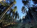 Evergreen forest or coniferous trees on the slopes of hills in the Alptal alpine valley, Einsiedeln - Canton of Schwyz Royalty Free Stock Photo