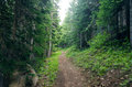 Evergreen forest path running through an in oregon Royalty Free Stock Photo
