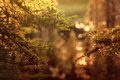Evergreen glow warm of soft focus lights with spruce branches Stock Photo