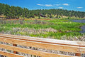 Evergreen lake boardwalk the sits atop shoreline reeds and marshland seen in springtime with spruce forests on the hillsides and Royalty Free Stock Image