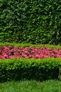 Evergreen topiary and flower bed Stock Image