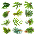 Evergreen tree branch set isolated on white background Stock Photo