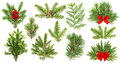 Evergreen tree branches. Christmas decoration red ribbon berries