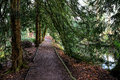 Evergreen trees the sweeping branches of the create a natural beautiful tunnel along the pathway Stock Photos