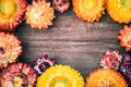 Everlasting flowers on wooden board for use as background Stock Photos