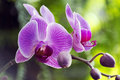 Everyday view an exotic flower found in life Royalty Free Stock Images
