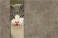 Evil cat an hiding behind a concrete wall Royalty Free Stock Photos