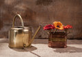 Ewer Stock Images