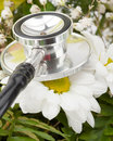 Examining flower by stethoscope Royalty Free Stock Photo