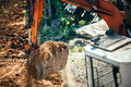 Excavator moving earth on construction site. Close-up of bucket full of earth Royalty Free Stock Photo