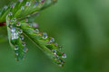 Exciting macro of dew Royalty Free Stock Photo