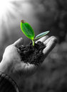 Exclusive - agriculture concept , little plant in hand Royalty Free Stock Photo