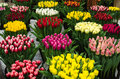Exhibition of tulip varieties Stock Image
