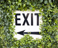 Exit sign with ivy a white overgrown by Royalty Free Stock Photography