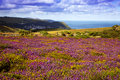 Exmoor vista looking towards lynmouth Stock Photos
