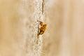 exoskeleton of bee