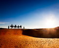 Exotic adventure: turist riding camels on sand dunes in desert at sunrise. Royalty Free Stock Photo