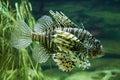 Exotic aquarium fish Stock Images