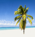 Exotic beach with beautiful alone palm tree enteri Royalty Free Stock Photo