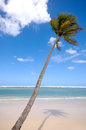 Exotic beach palm hanging over caribbean with the coast in the background Royalty Free Stock Photos