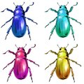 Exotic beetles wild insect