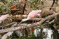Exotic bird pink aquatic in aviary the oceanographic of the city of arts and sciences in valencia spain Stock Photo