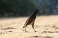 Exotic bird walking along the beach hunting Stock Photos
