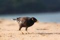 Exotic bird walking along on beach sandy Stock Photos