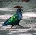 Exotic bird walking down the beach thailand image of Stock Photo