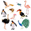 Exotic Birds Set Royalty Free Stock Photo