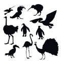 Exotic Birds Silhouettes Royalty Free Stock Photo