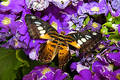 Exotic butterfly. Royalty Free Stock Photography
