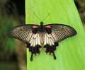 Exotic butterfly Royalty Free Stock Photography