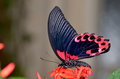 Exotic butterfly in natural habitat Royalty Free Stock Photo