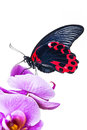 Exotic butterfly Royalty Free Stock Photo