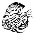 Exotic coral fish black and white vector illustrat Royalty Free Stock Photo