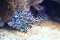Exotic coral fish Royalty Free Stock Photo