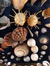 An exotic diversity of seashells Royalty Free Stock Photo