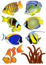 Exotic fish Stock Photo