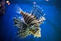 Exotic fish Royalty Free Stock Photo