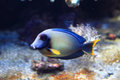 Exotic fish in the sea Royalty Free Stock Photo