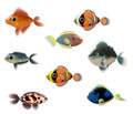 Exotic fishes on white background Stock Image