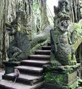 Exotic forest of bali in the monkey indonesia Stock Photos